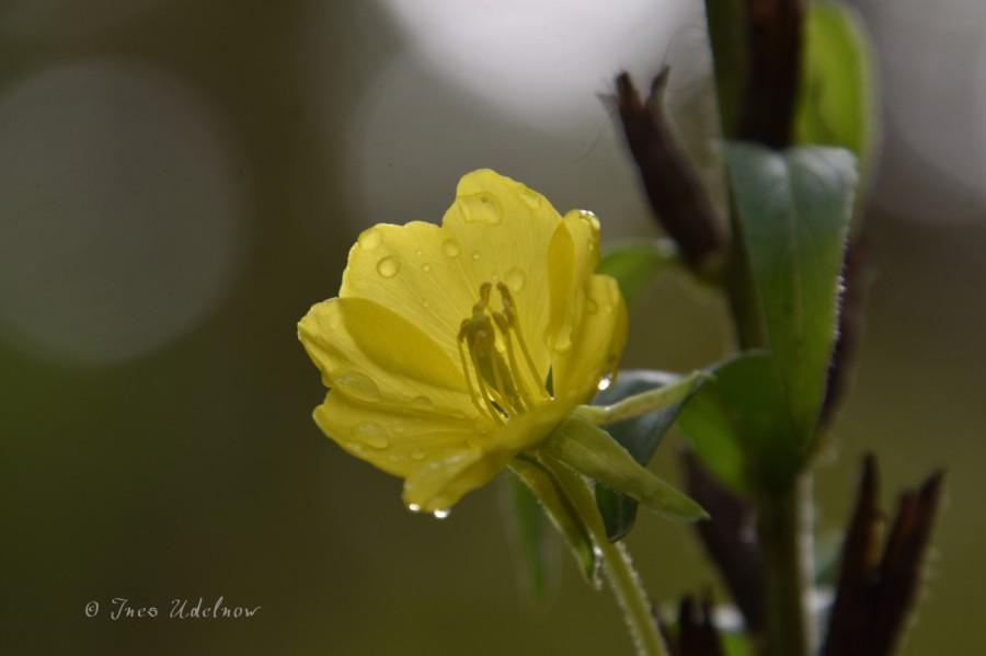 Blütentupfen im Herbstwald