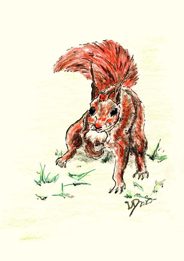 Für Eichhörnchenfans …