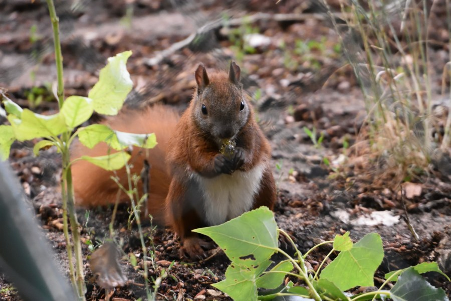 Eichhörnchen mit Glitzer