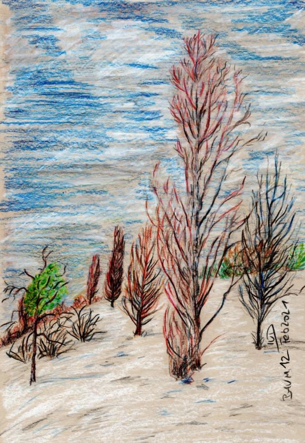 30 Tage – 30 Bäume. Pappellandschaft