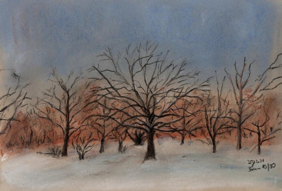 30 Tage – 30 Bäume. Baum 13. Winterschneelandschaft mitAhorn