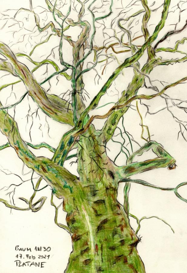 30 Tage – 30 Bäume. Baum18
