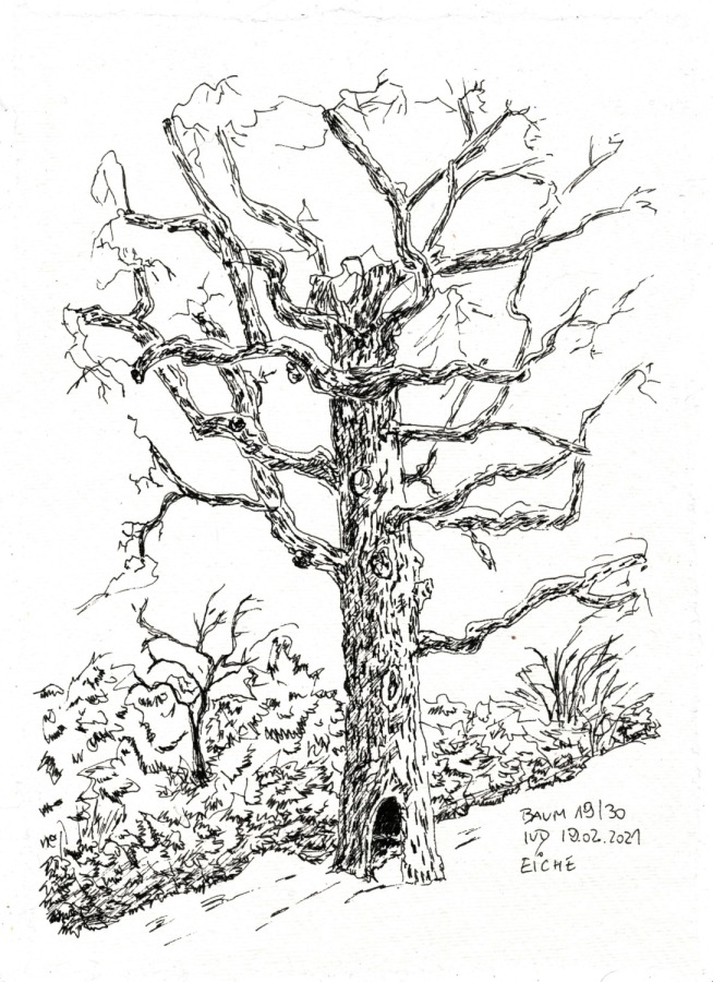 30 Tage – 30 Bäume. Baum19