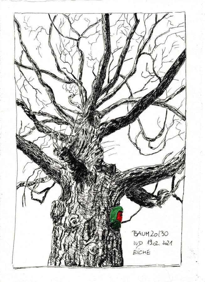 30 Tage – 30 Bäume. Baum20