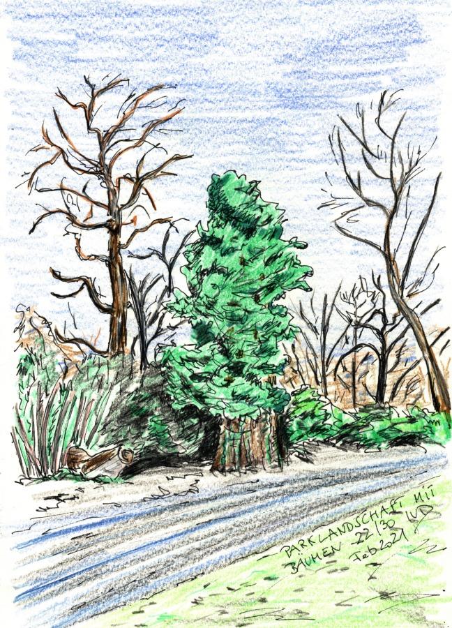 30 Tage – 30 Bäume. Baum22
