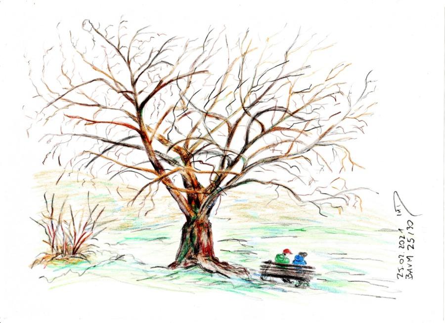 30 Tage – 30 Bäume. Baum25