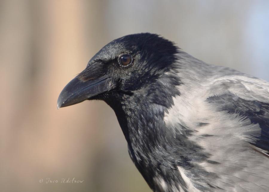 Der weise Vogel