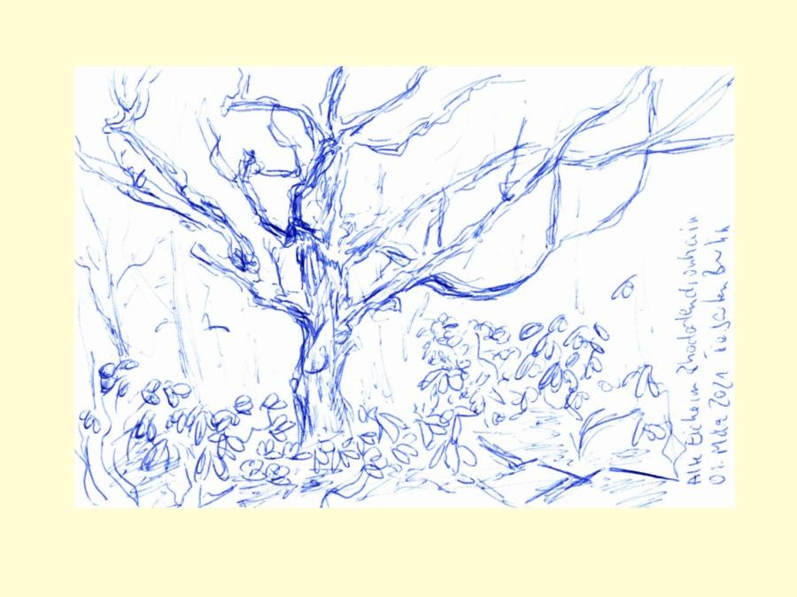 30 Tage – 30 Bäume. Baum 28. Eiche im Rhododendrenhain