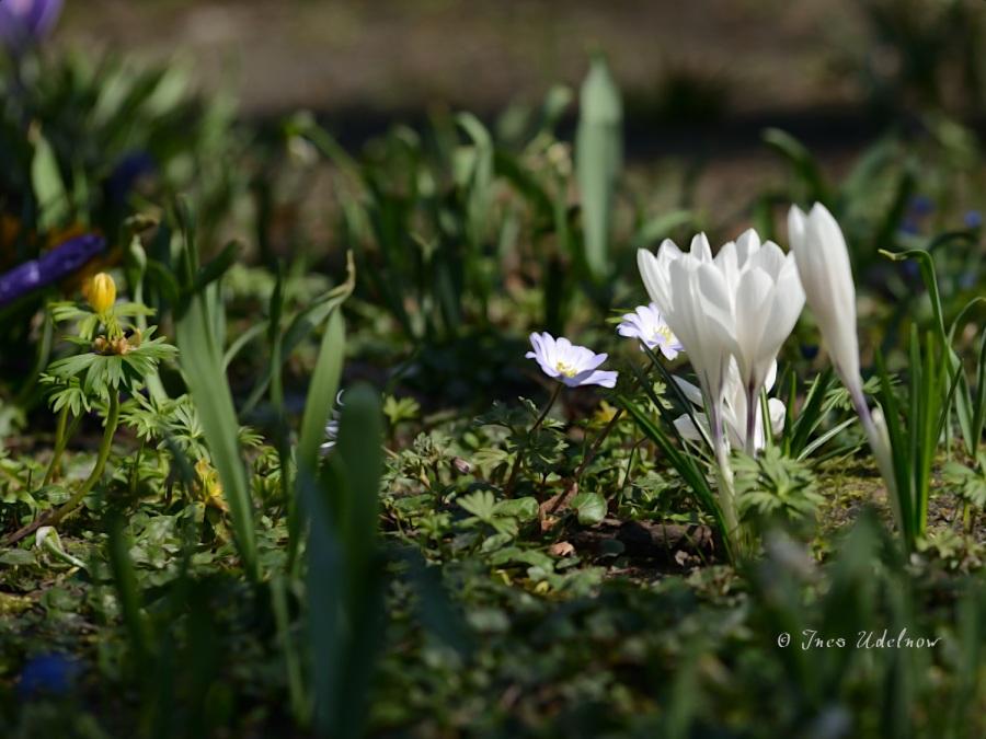 Frühlingswiesenleuchten