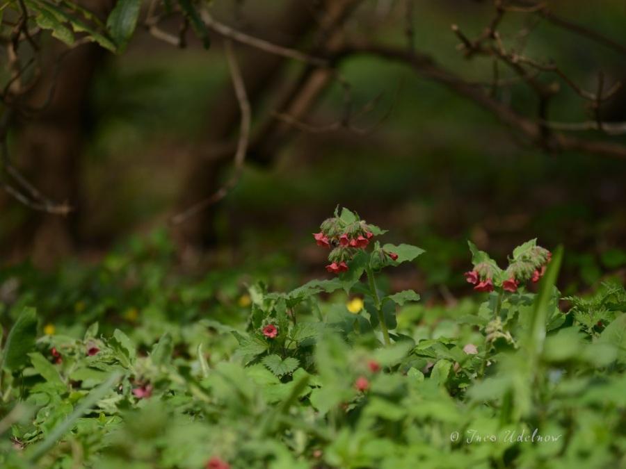 Frühlingswiesenleuchten (4)